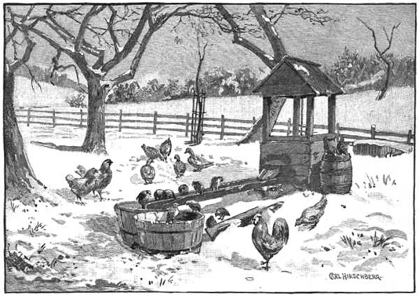 The old chicken coop stock image. Image of trees, coop ...  |Winter Scenes With Chickens